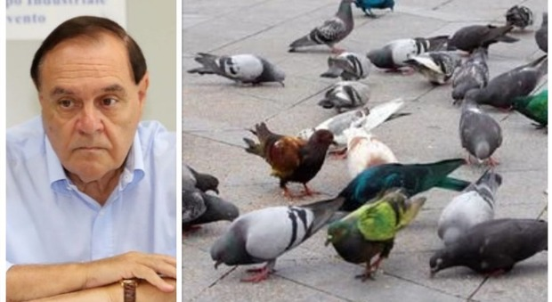 Clemente Mastella scatena la guerra ai piccioni: «Vietato dar loro da mangiare»