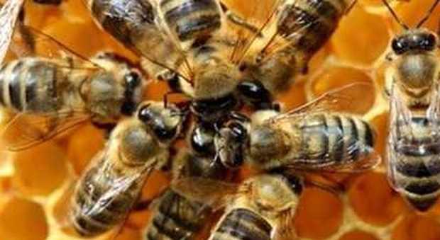 Caldo, le api stressate non volano più: la produzione nazionale di miele crolla del 41%