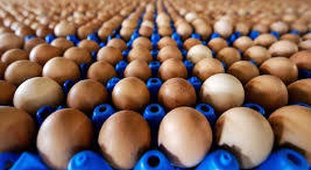 Usa, ricerca allerta sulla cottura delle uova nel microonde - video