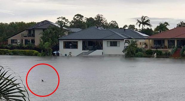 Uno squalo nuota tra le case: la foto dall'Australia è virale