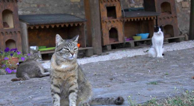 La colonia felina degl aristogatti del Castello di Santa Severa