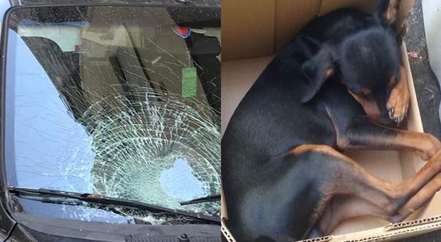 Cane insegue una mosca, salta dalla finestra e precipita dal settimo piano: morto sul colpo