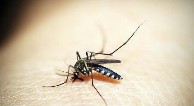 Zanzara, cosa è encefalite equina orientale: la malattia del sonno
