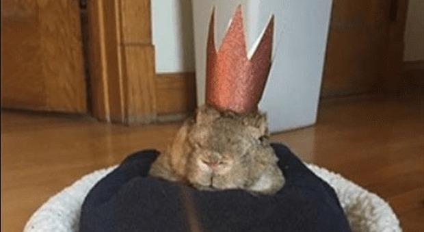 Mick, coniglio da record, ha 16 anni: è il più anziano al mondo