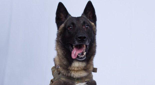 «Ecco il cane che ha catturato Al Baghdadi», l'omaggio di Trump su Twitter