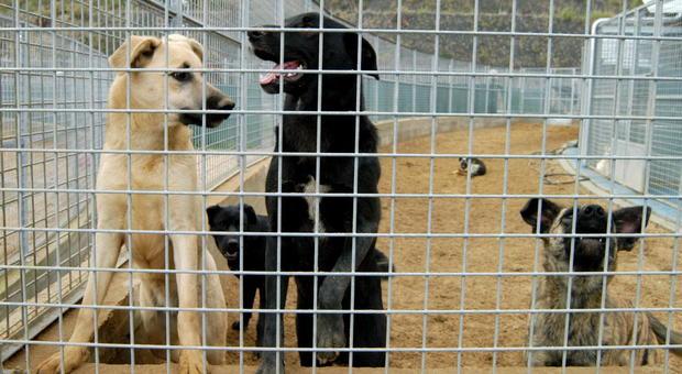 """Roma, """"la delegata non tutela gli animali"""": scatta la petizione bipartisan a Raggi"""