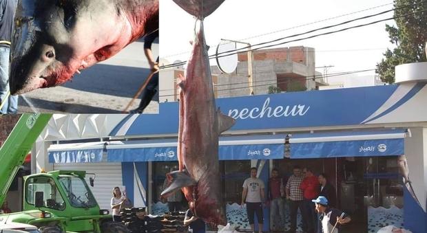 Il grande squalo bianco pescato in Tunisia (immagini pubblicate da Le pecheur su Facebook)