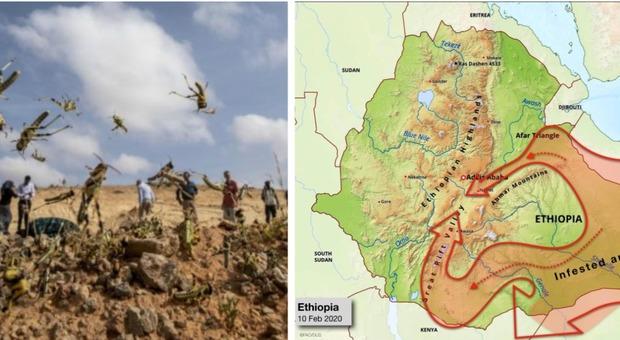 Locuste, l'allarme di Onu e Fao: rischia di morire un decimo degli abitanti di Etiopia, Kenya e Somalia