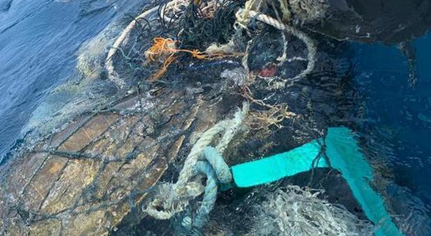 Il salvataggio delle tartarughe (foto pubblicata Ansa)