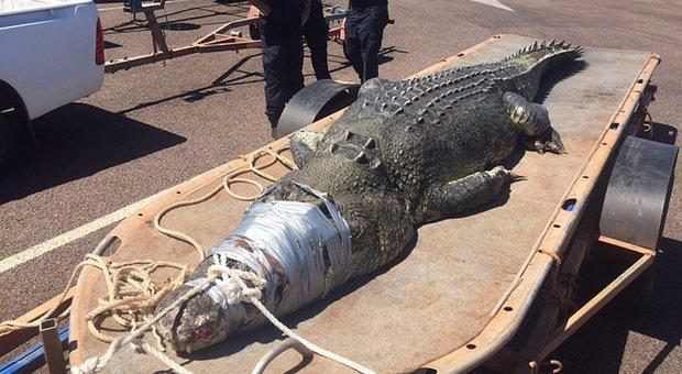 Australia, inondazioni record: coccodrilli e serpenti invadono le strade