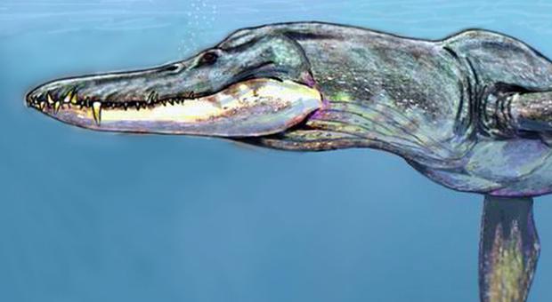 Mostro marino fossile scoperto in Polonia: nuotava nelle lagune tropicali e divorava T-Rex