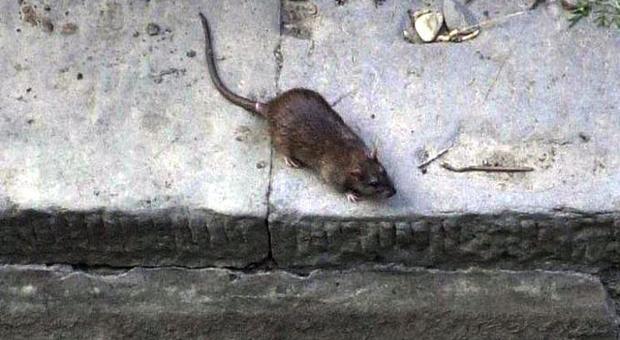Il dramma di Melina: mangiata viva dai topi mentre riposava nel suo lettino