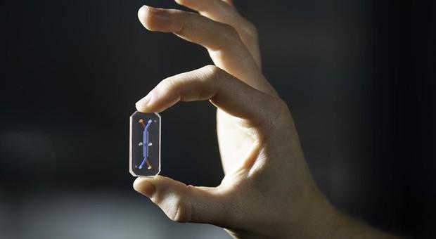 Il fegato su chip (Foto Wyss Institute/Harvard University)
