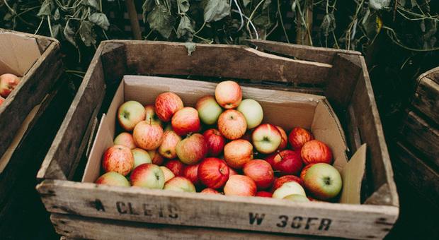 Una mela al giorno fa bene, se è una varietà antica fa ancora meglio