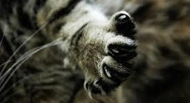 Donna tra vita e morte dopo il graffio del gatto di casa. «Choc settico da batterio mangia-carne»