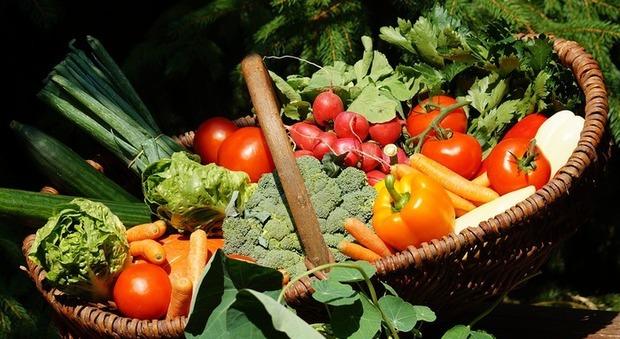 dieta a base vegetale sport