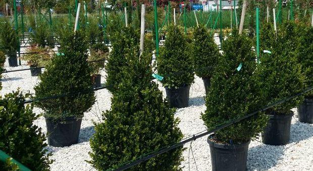 Vivaio Forestale Abruzzo : Organizzazione per la tutela forestale ambientale e agroalimentare