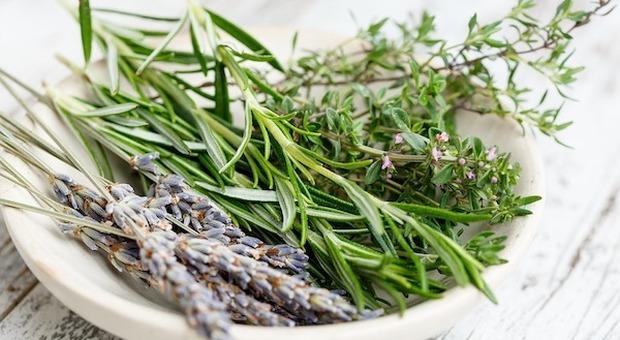 In Finlandia alla ricerca di erbe aromatiche e curative nei boschi