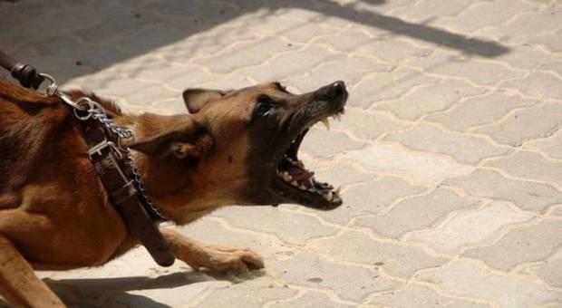 Azzannato da un cane ai genitali: uomo di 40 anni ricoverato in ospedale
