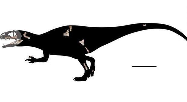 Dinosauro ma con i denti di uno squalo (la ricostruzione del paleontologo Duangsuda Chokchaloemwong )