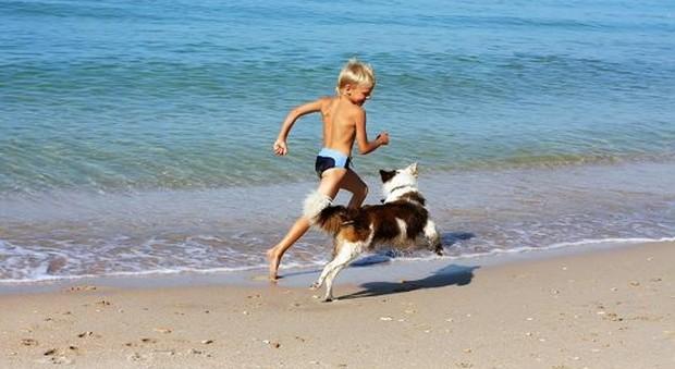 Pediatri e veterinari: i cani in spiaggia fanno bene ai bambini, ecco perché
