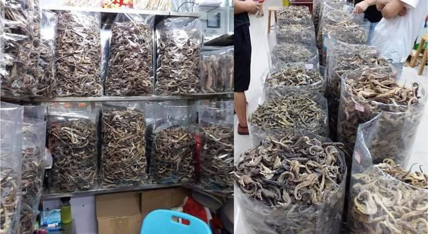 decine di migliaia di cavallucci marini essiccati e messi in vendita in Cina. Uno dei negozi di Guangzhou,specializzati. Foto pubblicate da Kevin Laurie