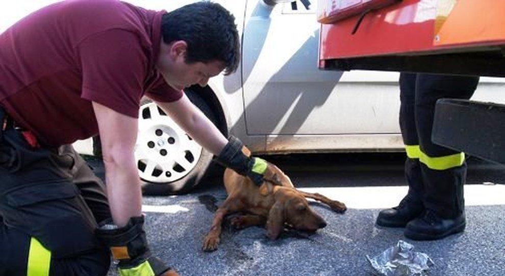 """Passa col rosso per salvare cane, riottiene i punti patente. Giudice di Pace: ha agito """"in stato di necessità"""""""