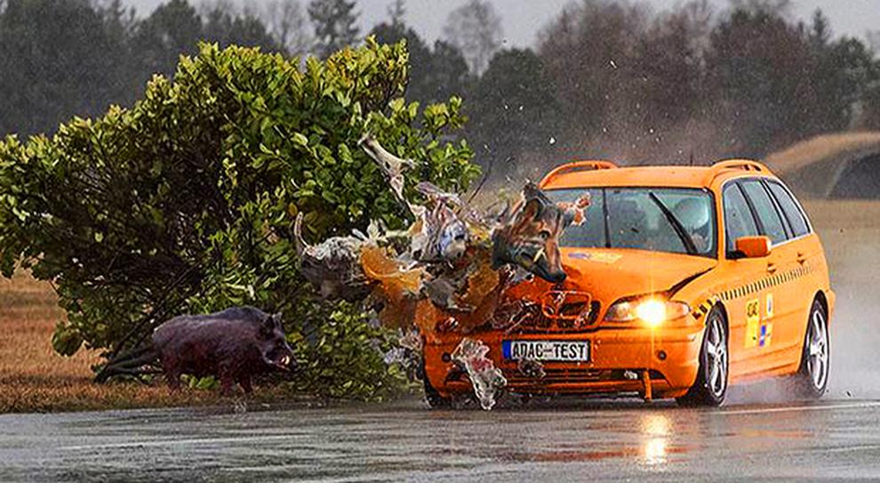 Una simulazione di un incidente tra un'auto ed un cinghiale