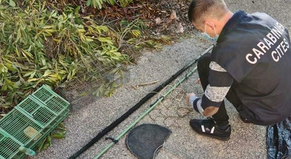 Cattura cardellini e tortore con una rete illegale, 70enne denunciato