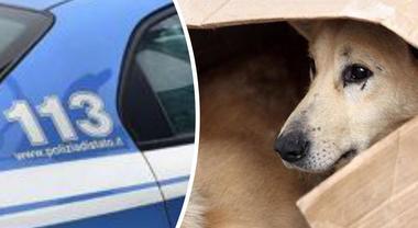 La poliziotta sfama un cane randagio, aggredita a calci e pugni e rimproverata da un consigliere comunale