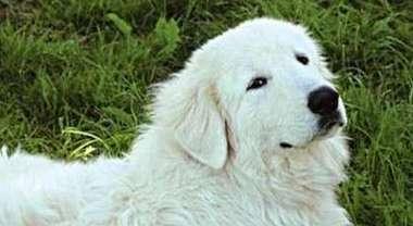 Cane muore poche ore dopo la padrona. Fofò si è lasciato andare per raggiungerla in cielo