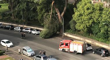 Roma, cade un ramo all'Eur: tanta paura, intervengono i vigili del fuoco