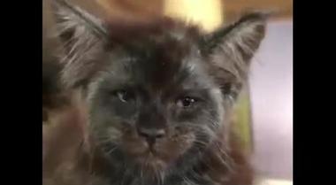 Il gatto con l'espressione umana (che non sembra gradire le attenzioni)