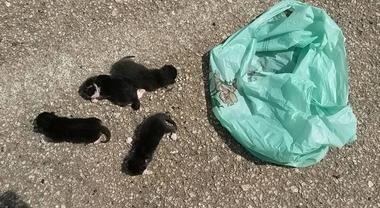 Buttano i gattini da un'auto in corsa: uccisi sulla strada