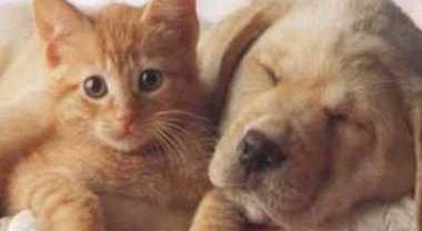 In vacanza con cani e gatti? I consigli dell'esperto per partire sereni