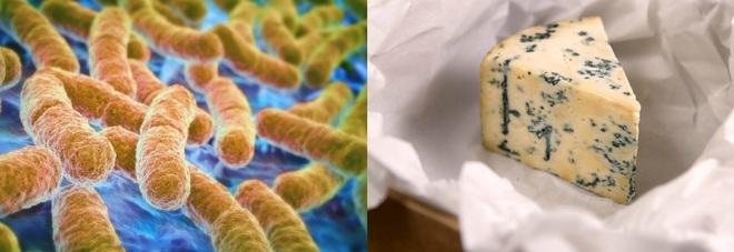 """Bambino mangia il """"formaggio blu"""" e muore per l'Escherichia coli"""