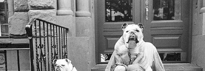 Erwitt  passione  da cani