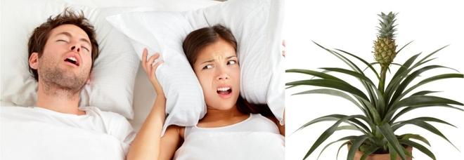 Addio notti insonni, una pianta di ananas fa smettere di russare: lo dice la Nasa
