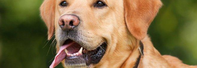 Due cani si perdono e percorrono 10 km in mezzo alle auto: residenti bloccano il traffico per proteggerli
