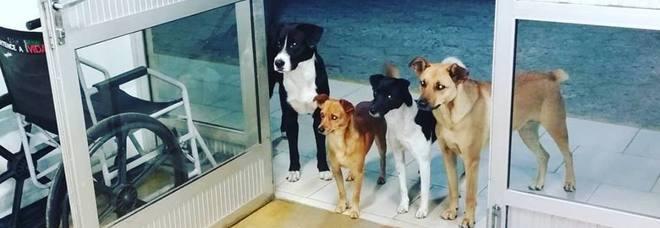 Il padrone clochard viene ricoverato in ospedale, la foto dei suoi cani in apprensione fa il giro del mondo