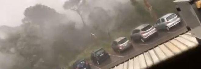 Maltempo, 200 pini abbattuti dal vento a Milano Marittima: paura fra i turisti