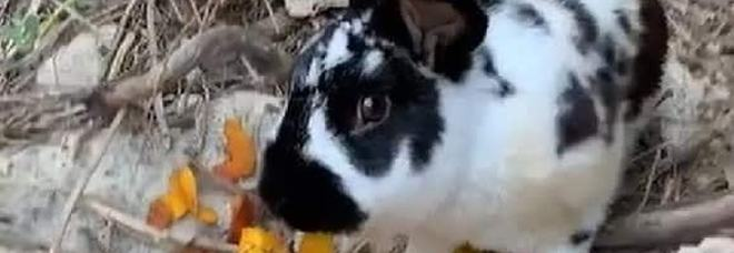 Coniglio ucciso a Ischia