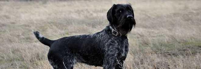 Una foto di archivio di un cane della stessa razza