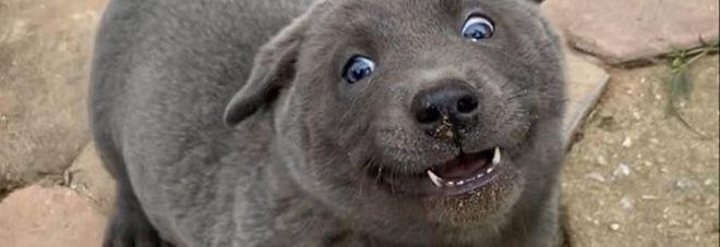 Cane o gatto? Le foto del cucciolo che confonde il web
