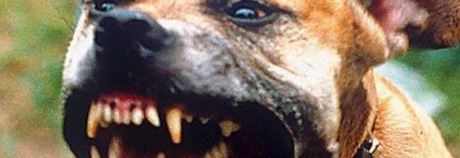 """Morso galeotto, ma il cane aggressivo se la cava con gli """"arresti domiciliari"""""""