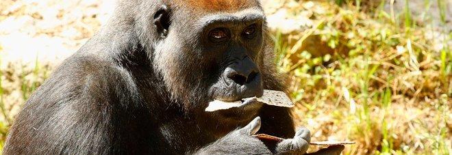 Uccisi 5 ranger eroi  che difendevano i gorilla