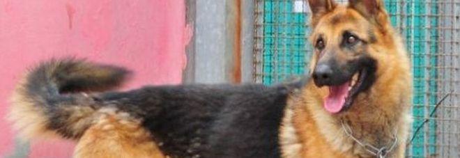 Padrone morto, il cane avvisa abbaiando dal terrazzo: ora è in canile