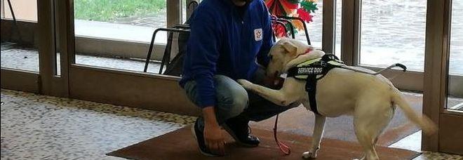 Moira, uno dei due cani addestrati per assistere persone affette da disabilità