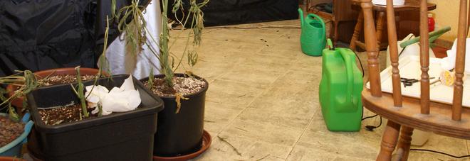 Casolare di campagna trasformato  nella serra hi tech per la marijuana