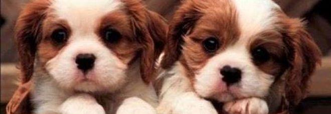 Promettono Cuccioli Di Cane In Dono Ma è Una Truffa Il Mattino